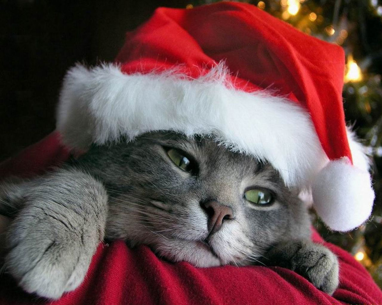 My Top Collection Christmas cat wallpapers 5 1280x1024