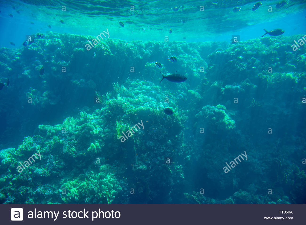 Abstract Aquatic Deep Seabed Underwater Background Stock Photo 1300x957