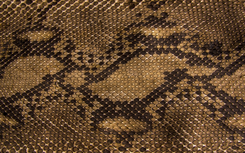 snake skin desktop background wallpapers HD 2880x1800