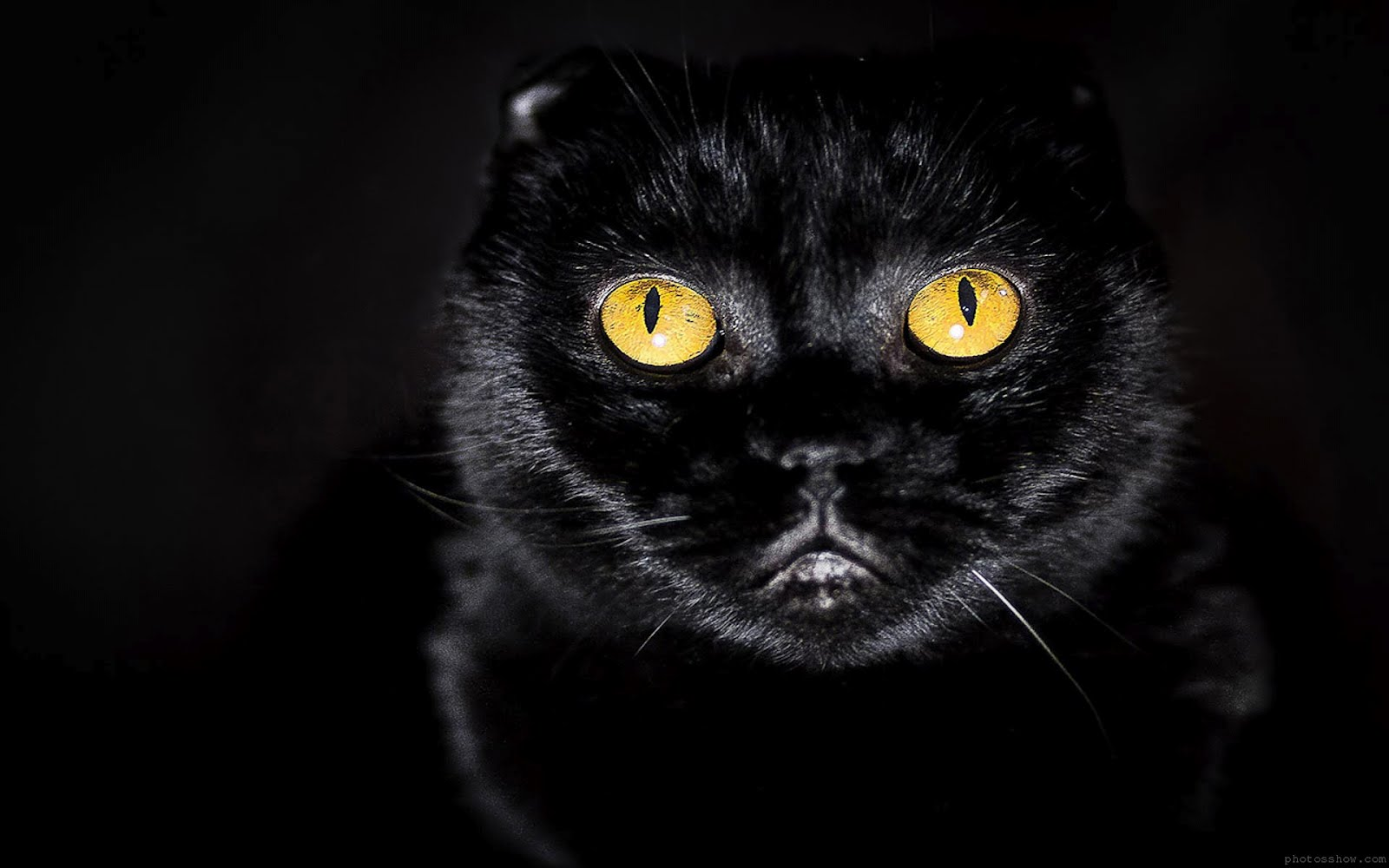 Free Download Black Cat Eyes Wallpapers Blue Cat Eyes Yellow Cat Eyes Green Red 1600x1000 For Your Desktop Mobile Tablet Explore 43 Black Cat Eyes Wallpaper Cute Black Wallpapers
