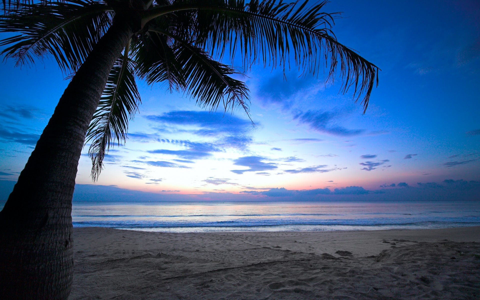 Tropical Sunset Palm Tree HD Wallpaper 1920x1200
