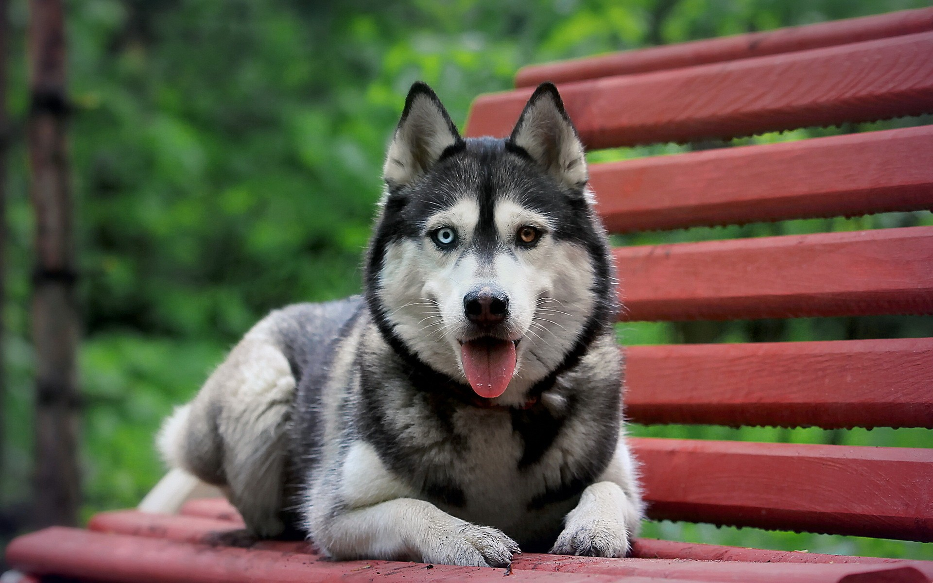 Cute Big Dog Seating on Bench HD Animal Wallpaper HD Wallpapers 1920x1200