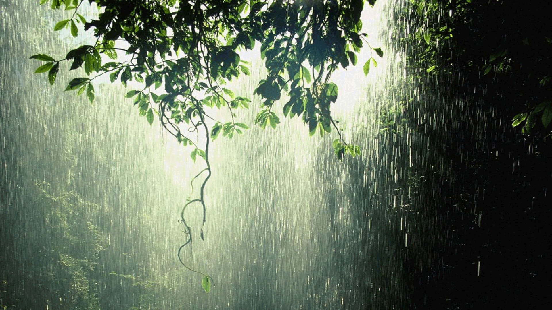 raining in forest HD Wallpaper Background Image 1920x1080 ID 1920x1080