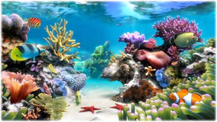 Aquarium live wallpaper windows 8 wallpapersafari for Live fish aquarium wallpaper