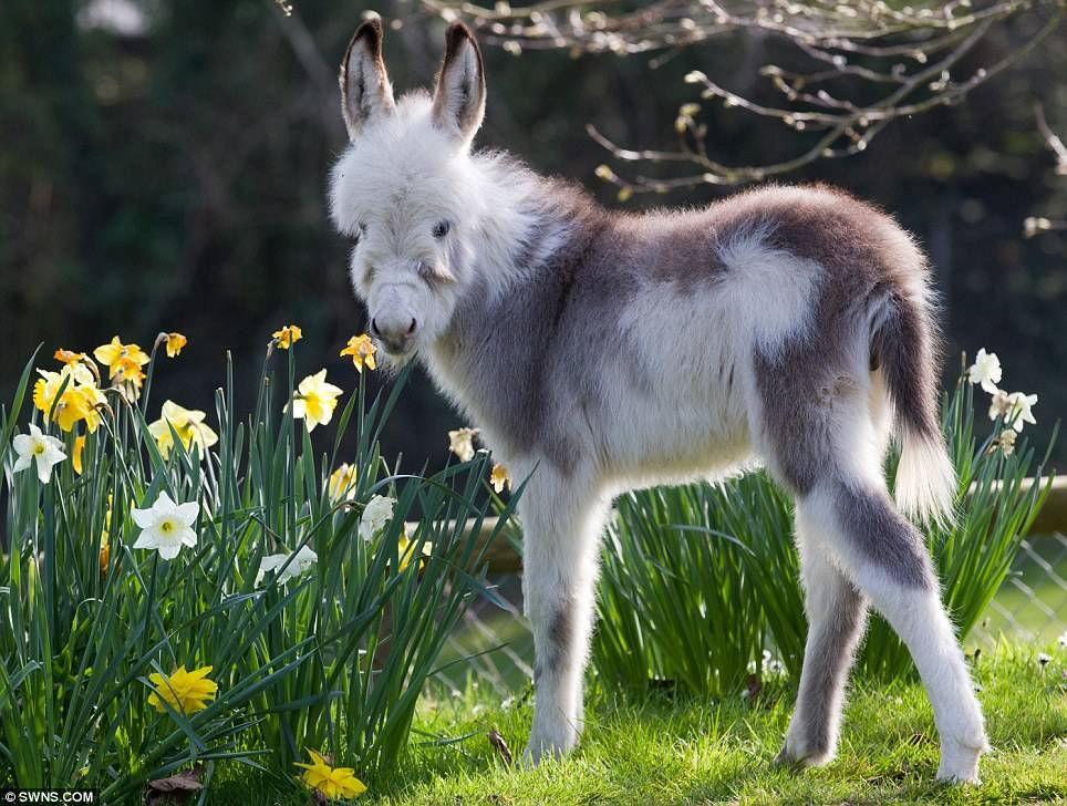 Baby Bi Color Donkey Farm Animals Wallpaper 964x728