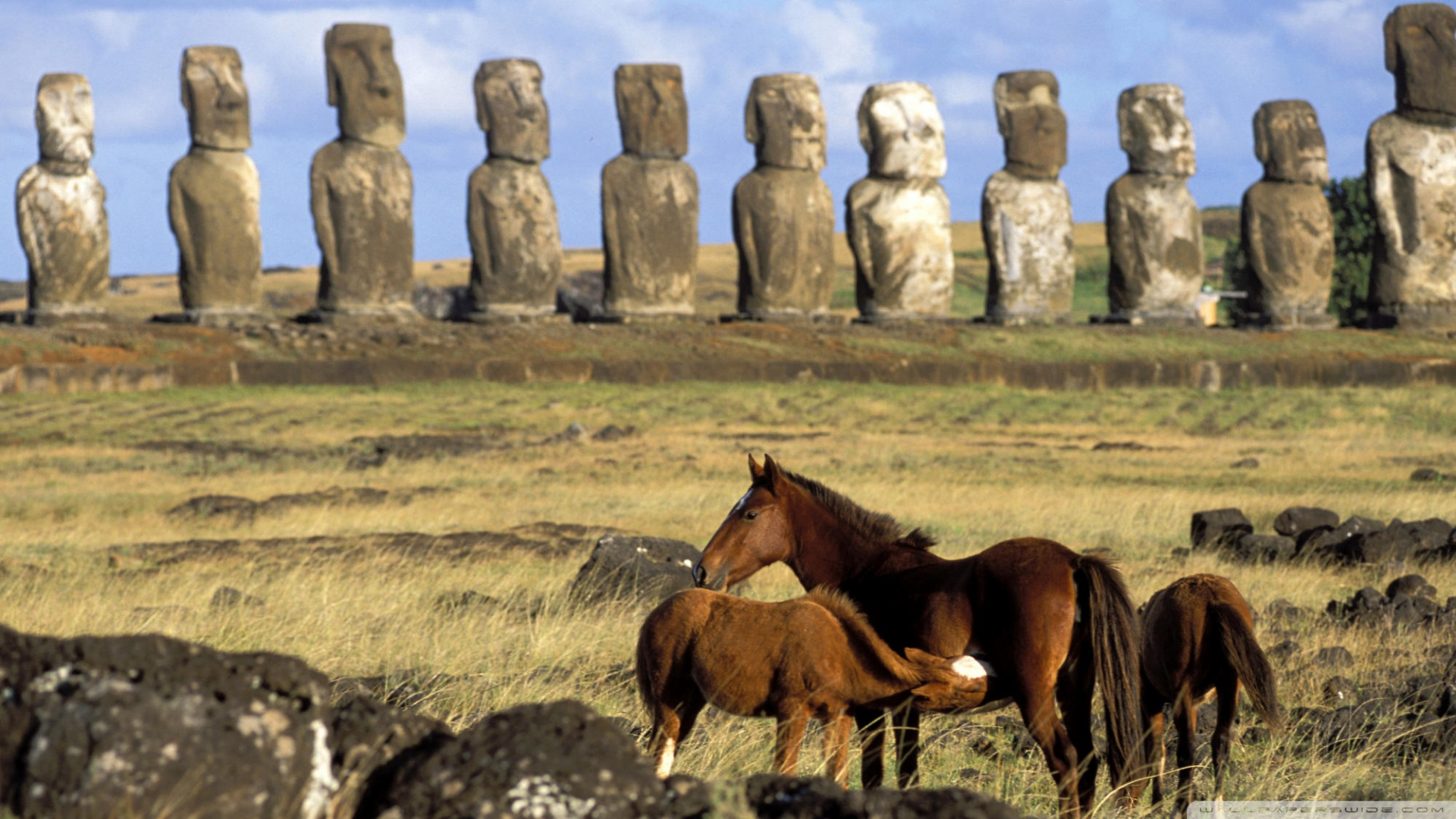 Easter Island Chile Wallpaper 1920x1080 Horses Of Easter Island 1920x1080