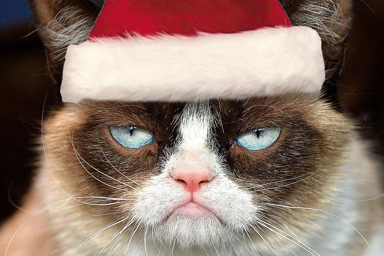 Grumpy Cat Christmas Wallpaper - WallpaperSafari