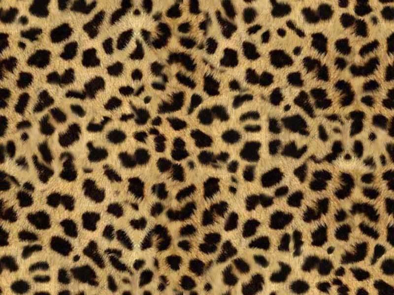 Leopard Background photo leopardjpg 800x600