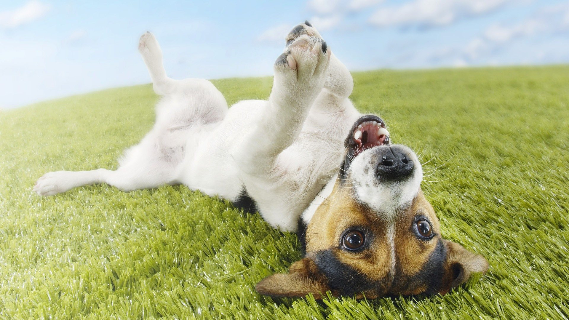 Funny Dog Backgrounds 27 Hd Wallpaper   Funnypictureorg 1920x1080
