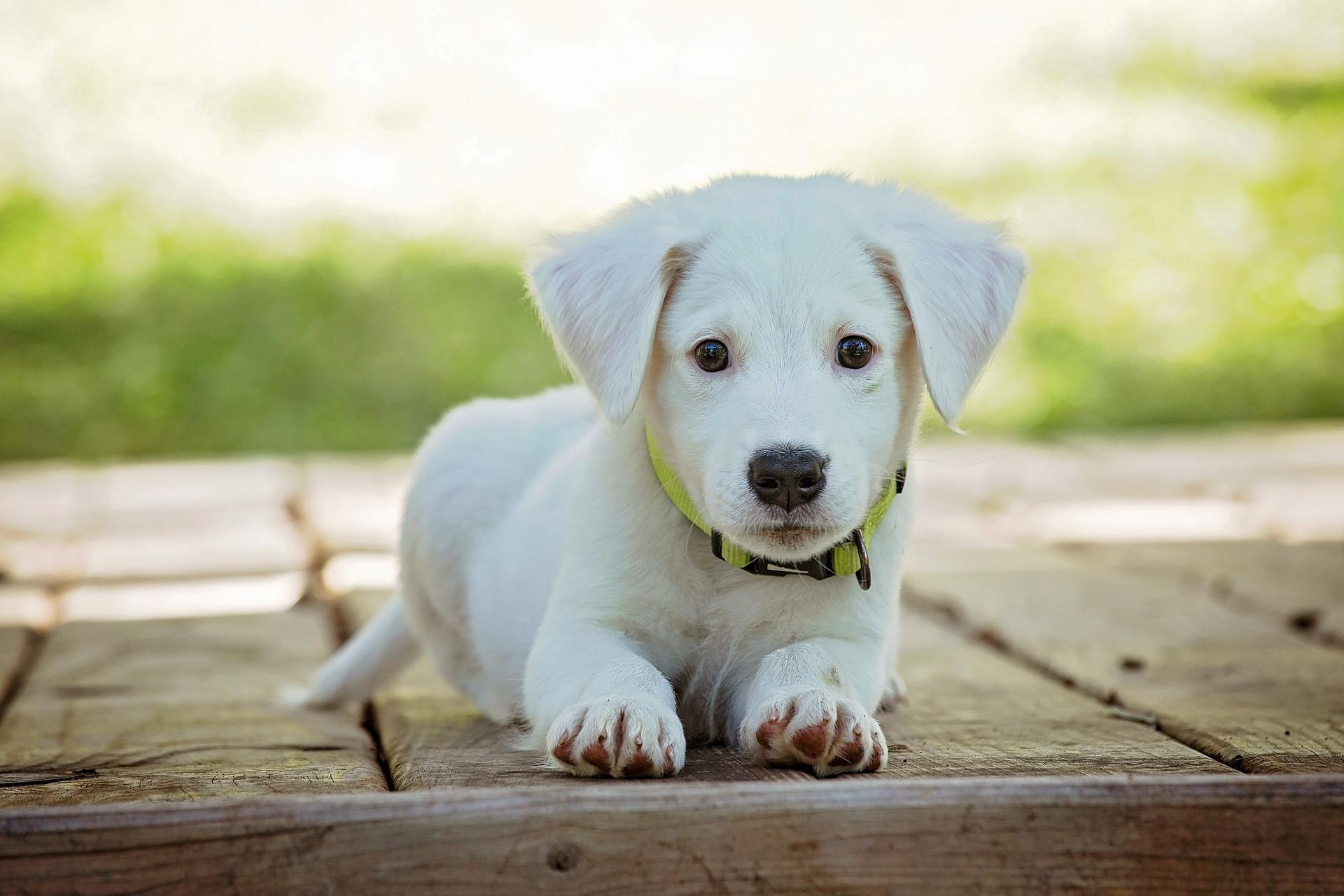 Cute Puppy Wallpaper HD for Android   APK Download 1920x1280