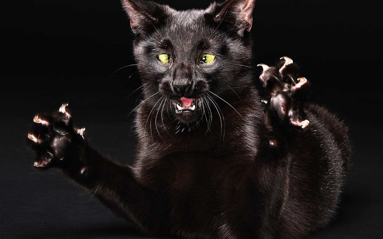 Scary black cat wallpaper animals Wallpapers 3d for desktop 3d 1280x800