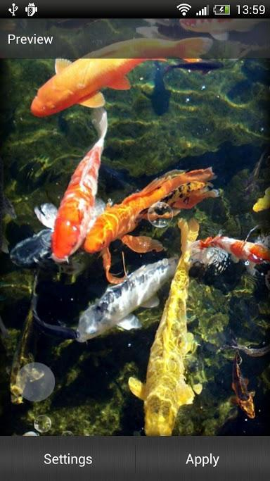 koi fish live wallpaper free android live wallpaper download html