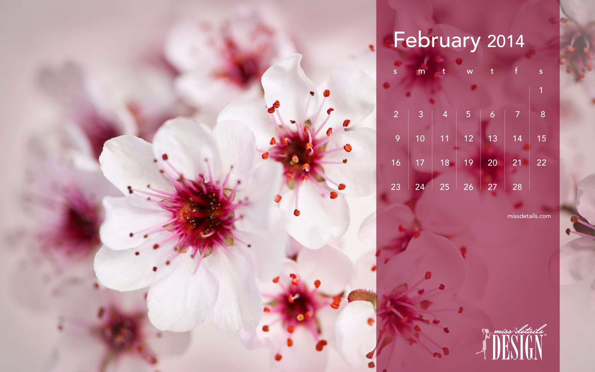 february desktop calendars cherry blossoms 1920x1200jpg 1920x1200
