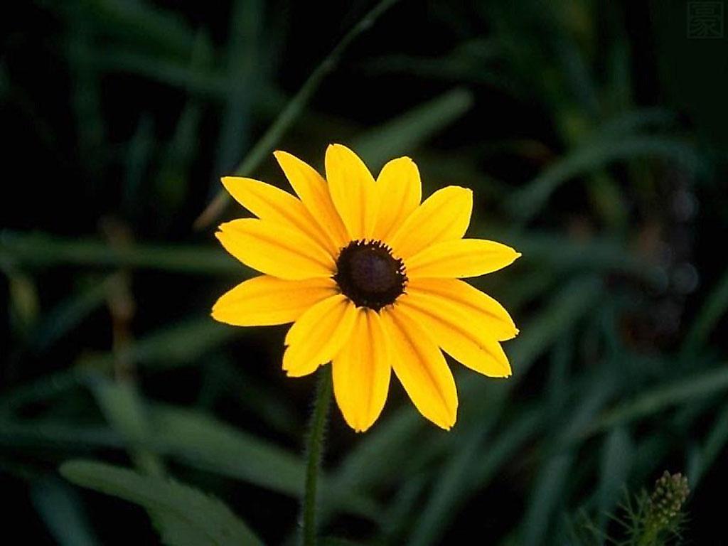 flowers for flower lovers Beautiful flowers desktop 1024x768