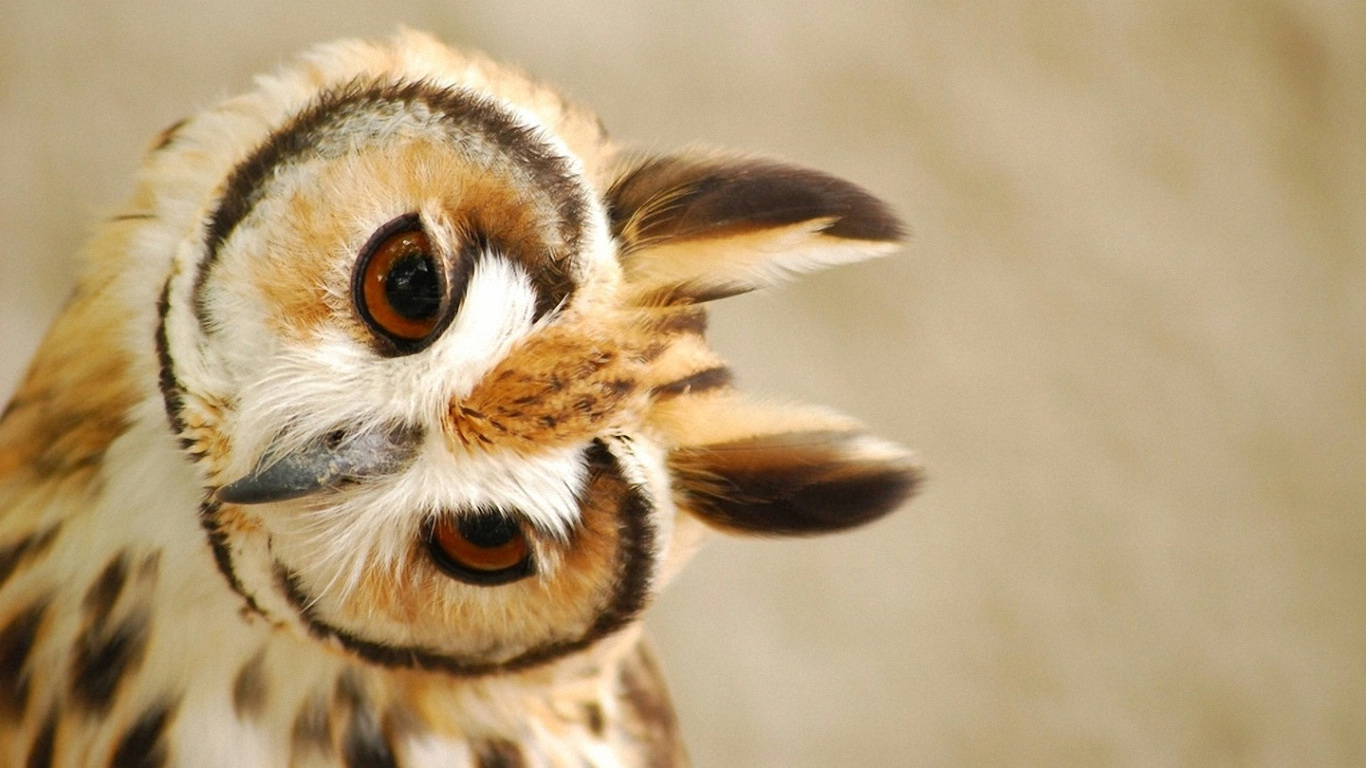 45+ Cute Owl Wallpaper HD on WallpaperSafari