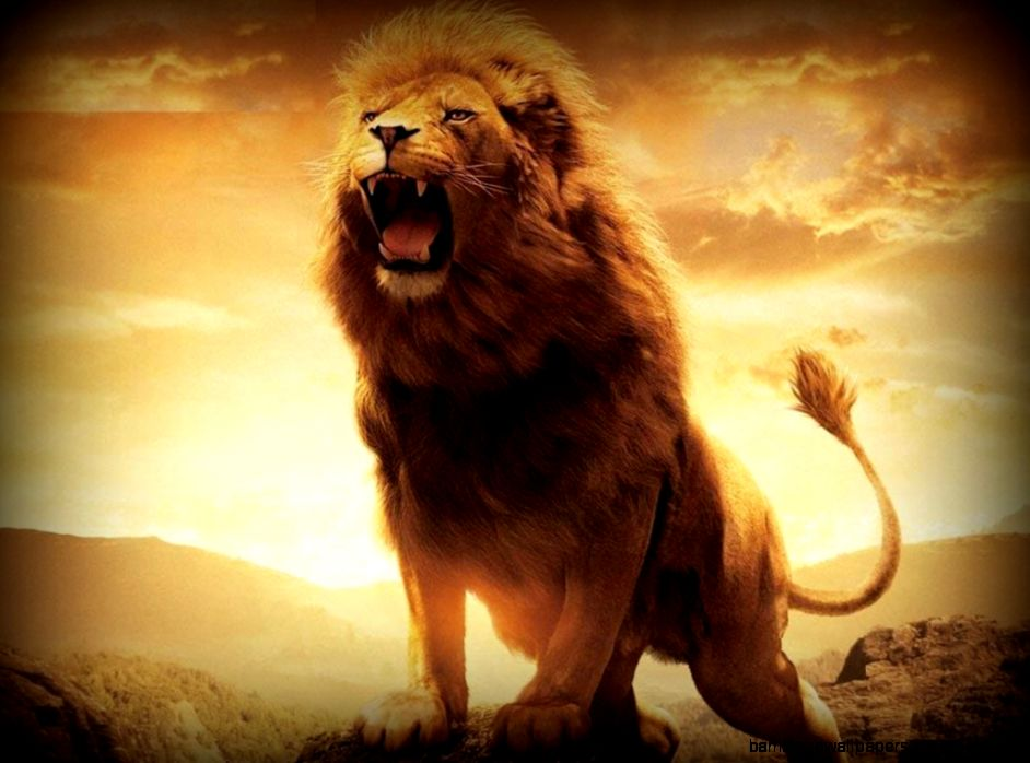Angry Lion Wallpaper Hd 1080P Amazing Wallpapers 942x698