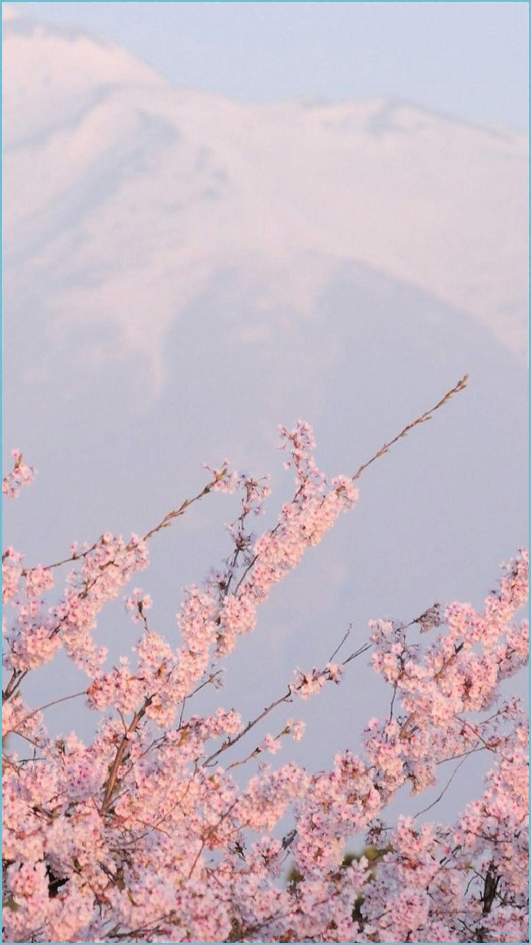 sakura wallpaper Tumblr Aesthetic backgrounds Pastel pink 1047x1862