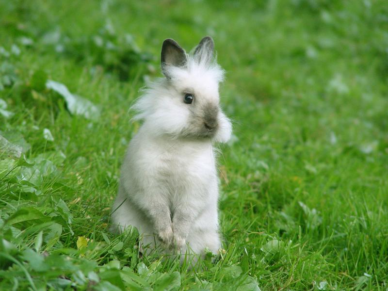 Bunny Wallpaper Adorablay Animals 800x600