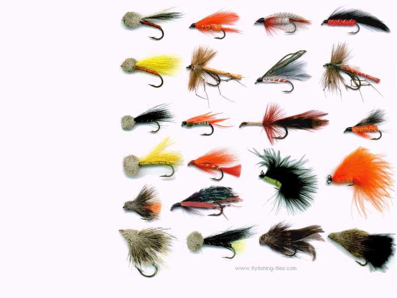 Fly Fishing Flies Wallpaper for your ComputerDesktop 800x600