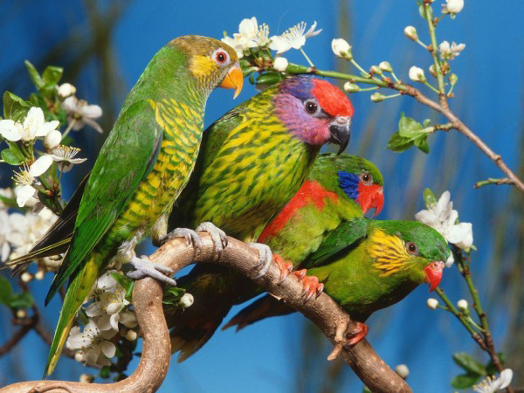 Birds Wallpapers Backgrounds Photos Images andPictures for 1024x768