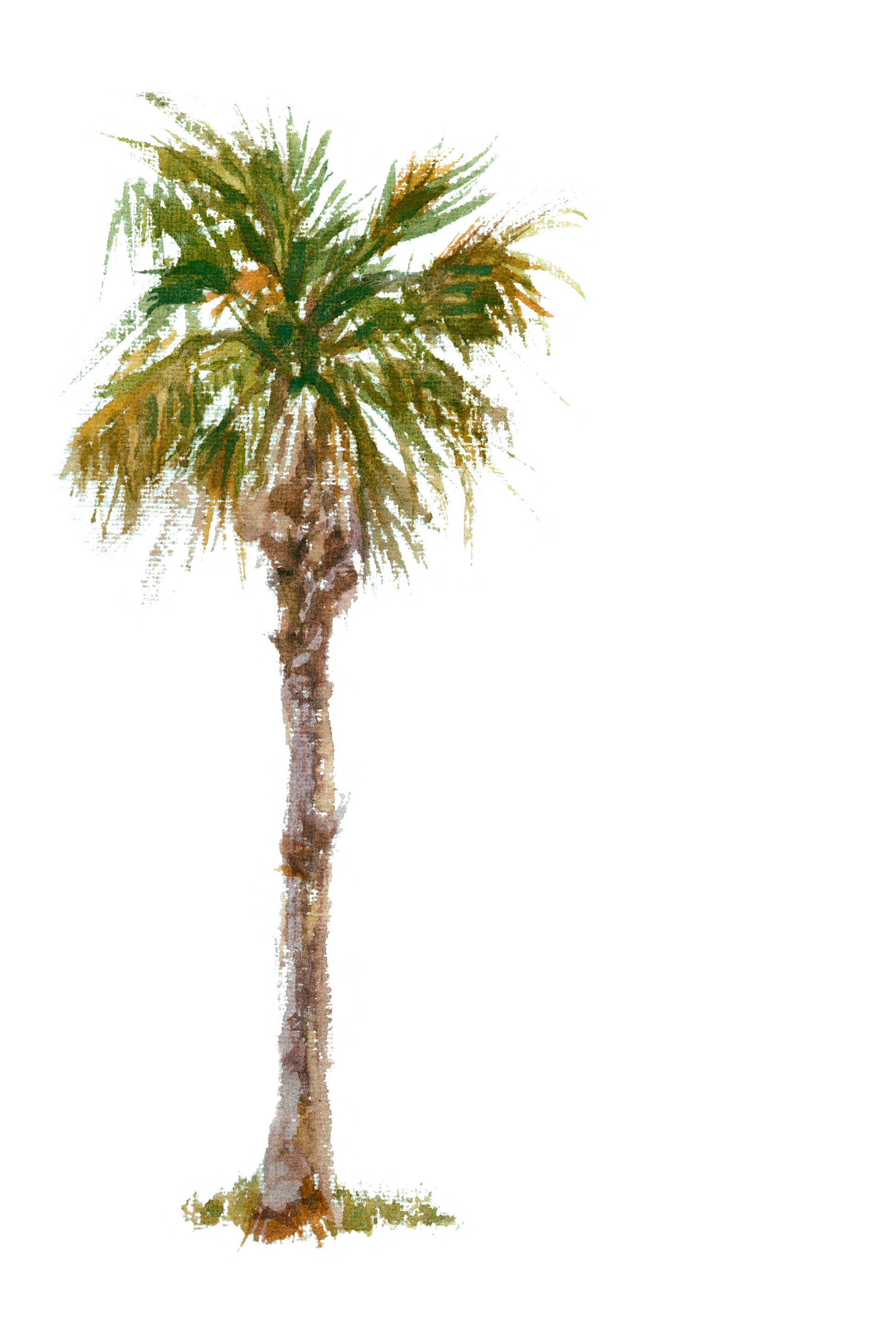 Pin Palm Trees Animations Tree Clipart Gifs 1935x2902