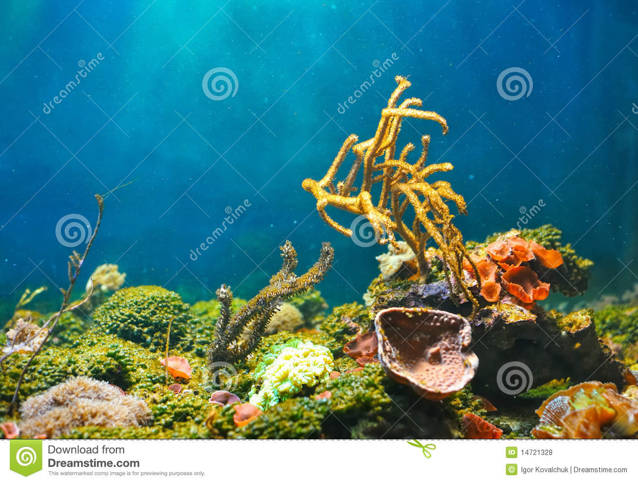 Pin Pin Colorful Underwater Coral Fish Wallpaper Full Hd On Pinterest 1300x985