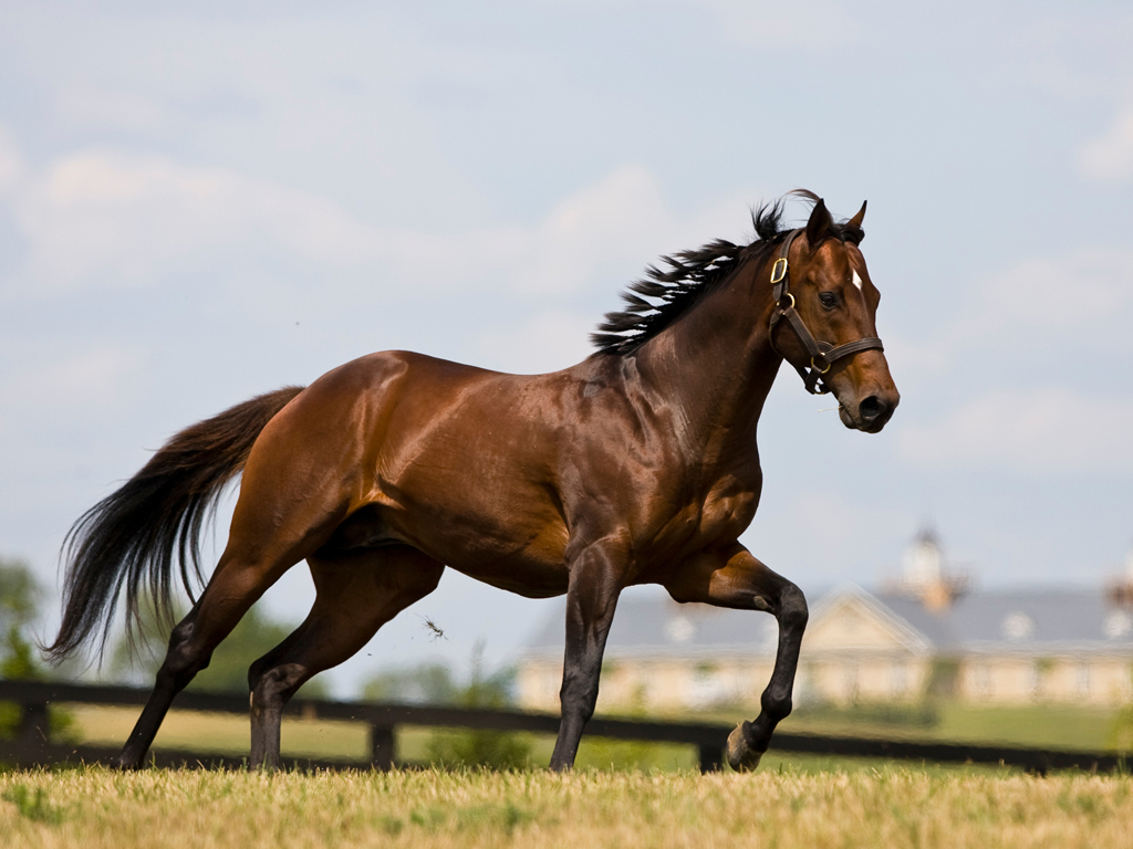 horse images wallpaper - wallpapersafari