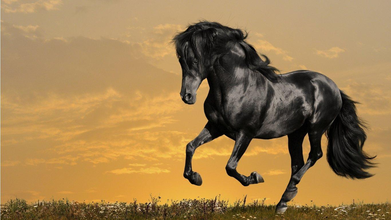 Zoo Park 12 Black Horse Wallpapers Black Horses Beautiful Wallpapers 1366x768