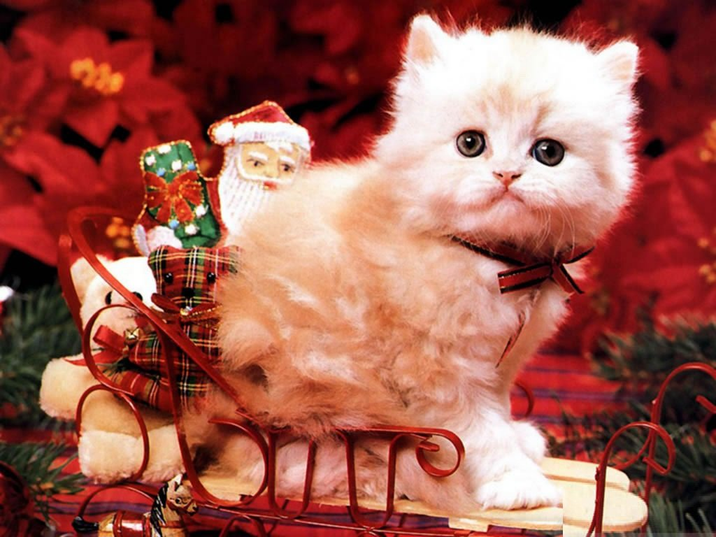 Cute Christmas Backgrounds Cute Christmas Desktop Backgrounds 1024x768