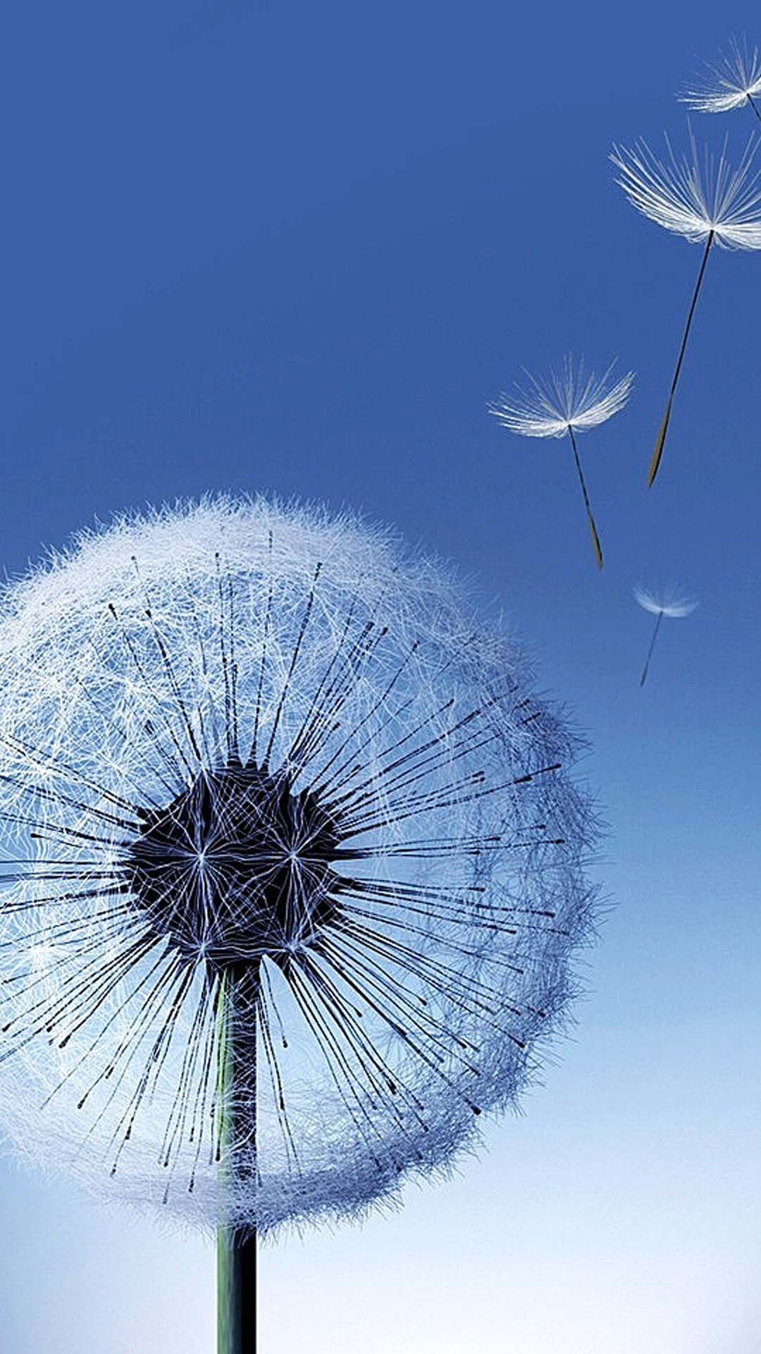 Dandelion Seeds Blowing Wallpaper Related pictures dandelion 1080x1920