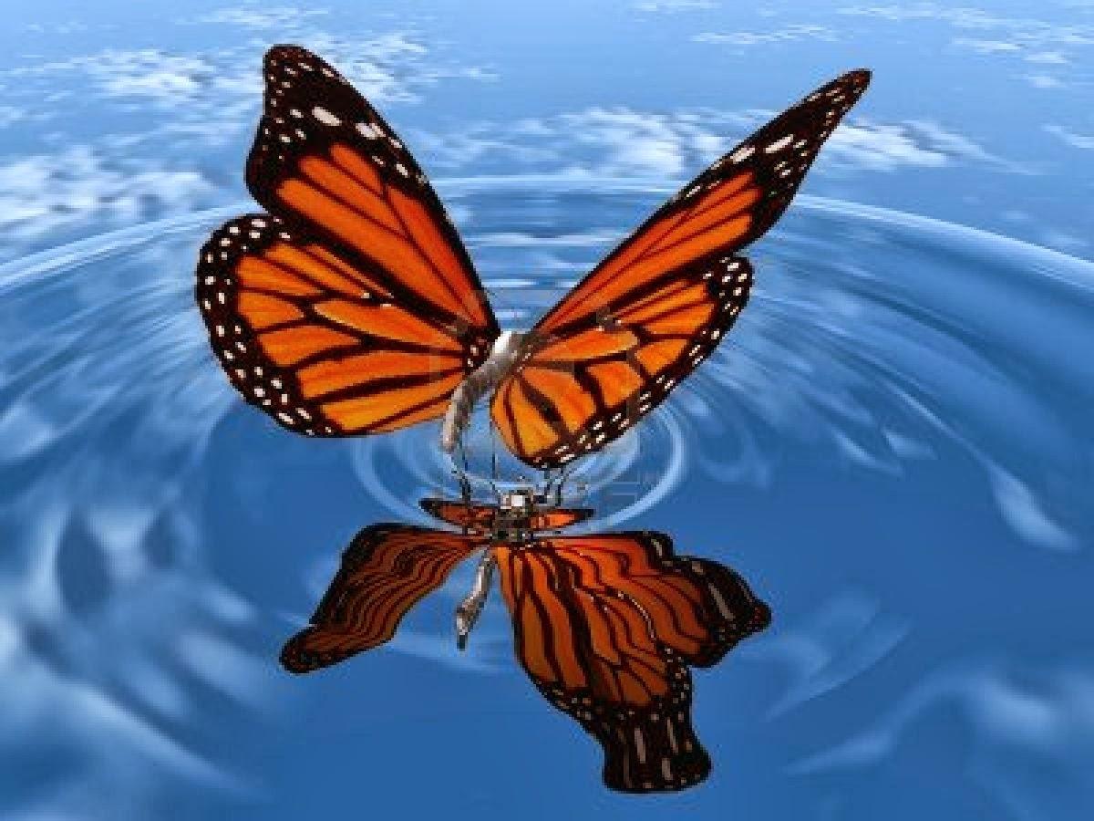 Butterfly Live Wallpaper - WallpaperSafari