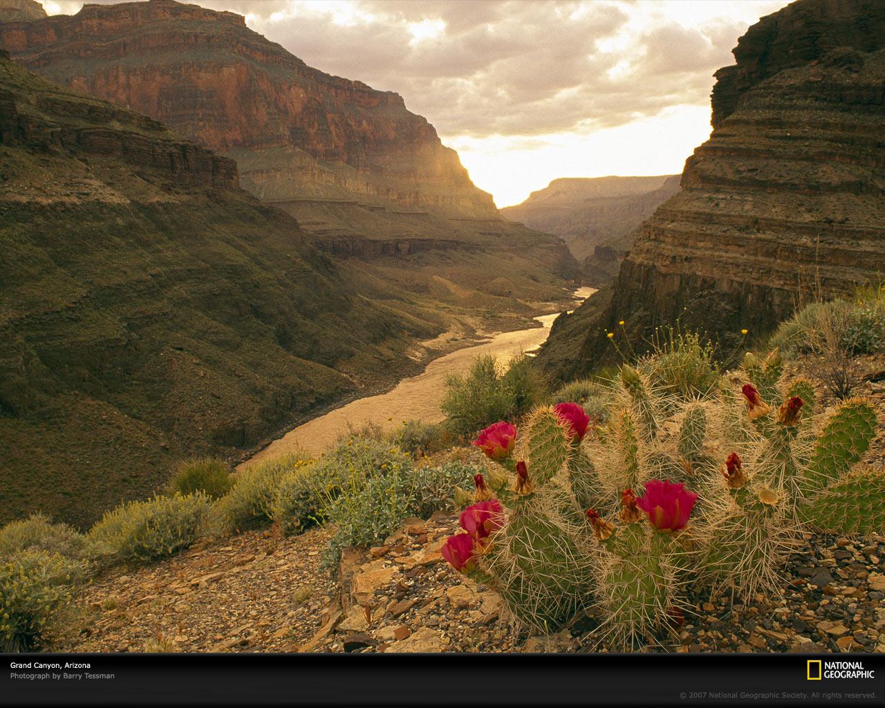 Grand Canyon Picture Colorado River Wallpaper Download Photos 1280x1024