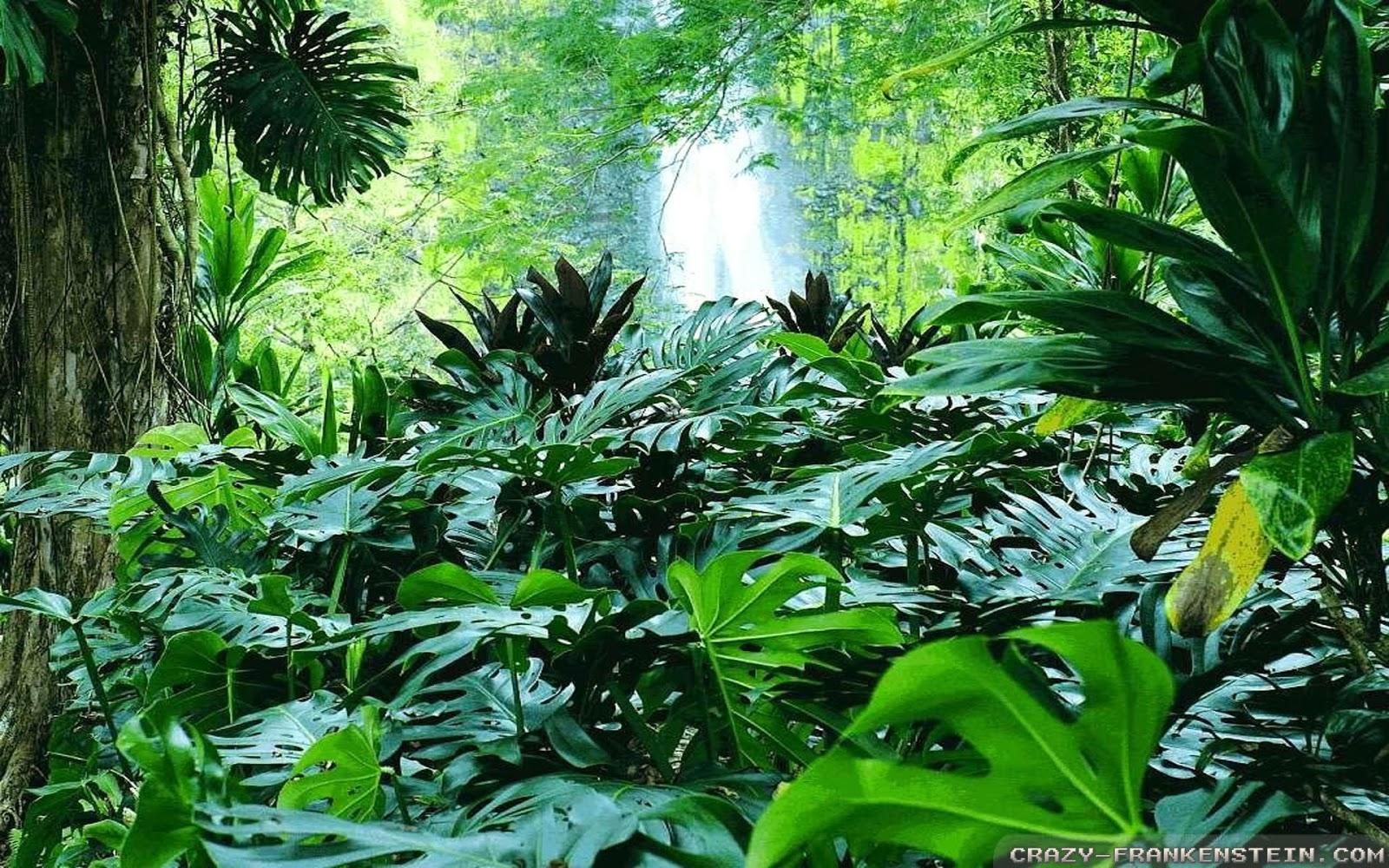 73 Tropical Forest Wallpaper On Wallpapersafari