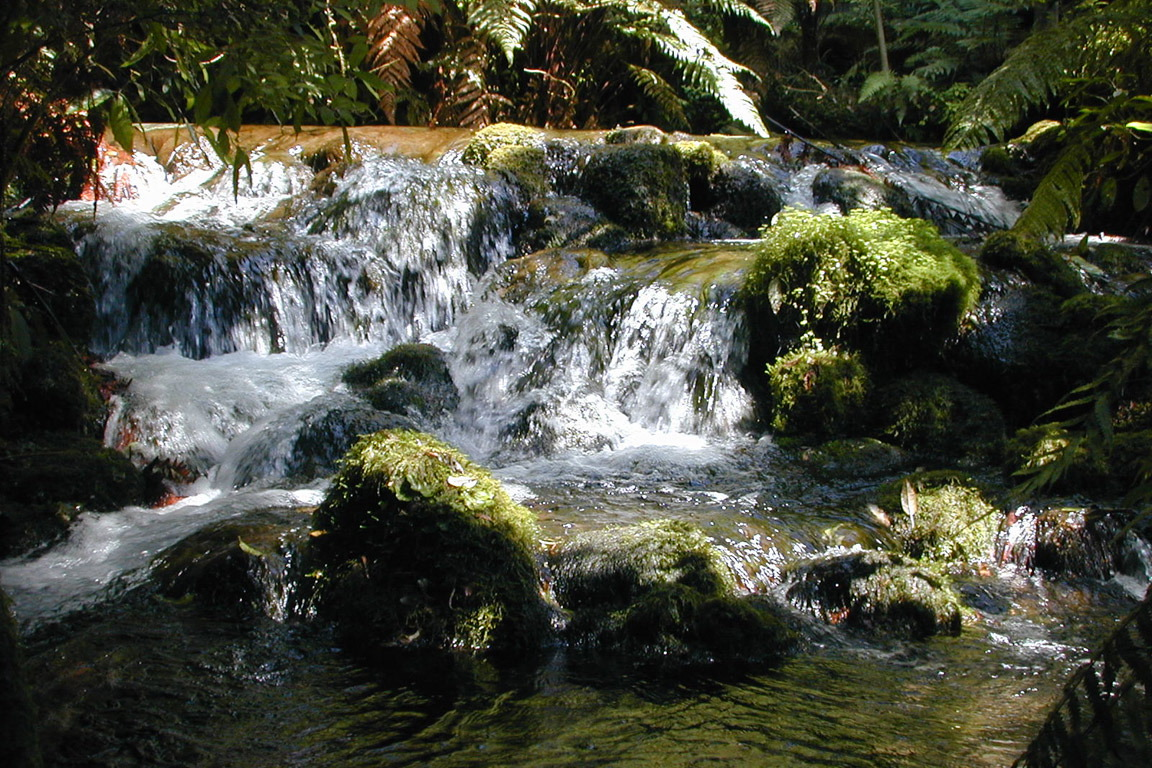 Trout Stream NZ 1152x768