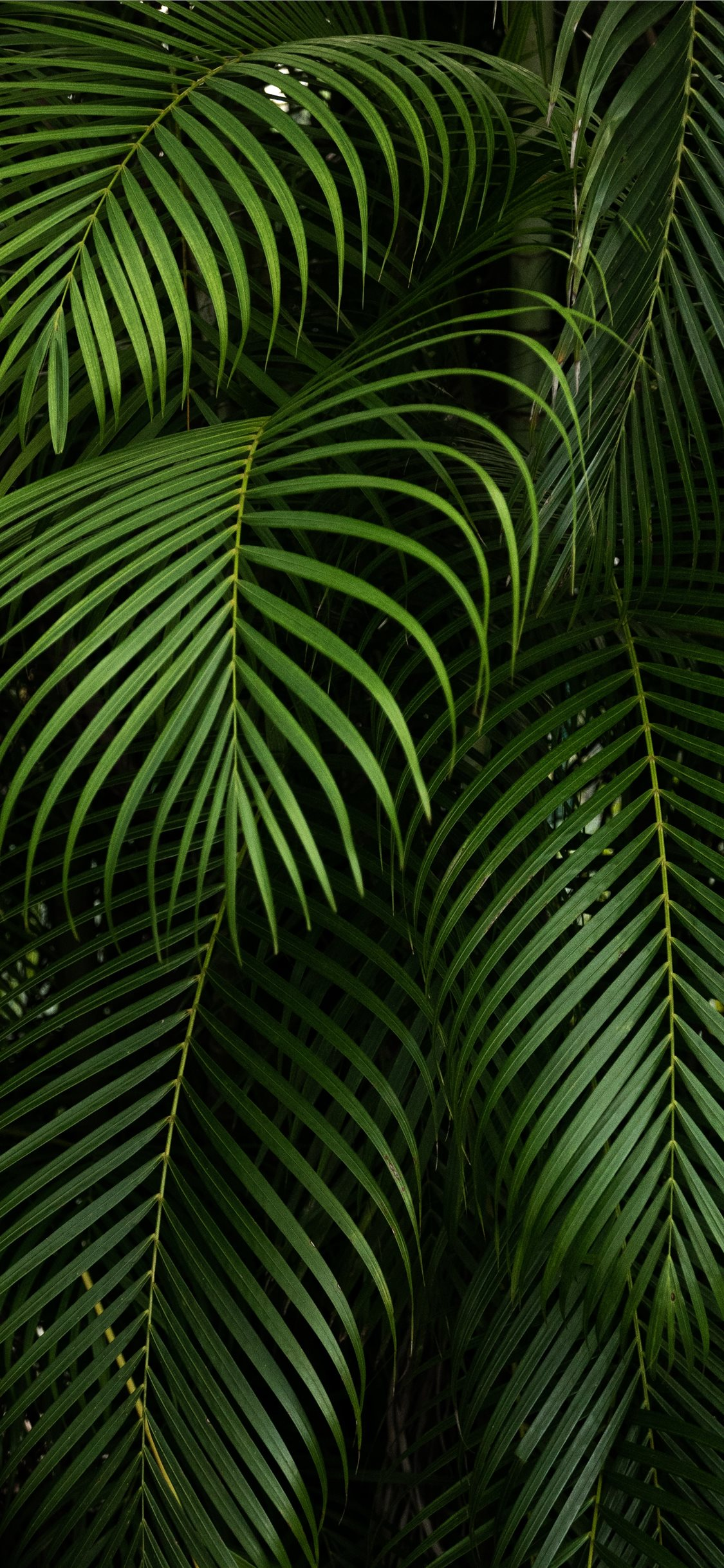Best vegetation iPhone X Wallpapers HD   iLikeWallpaper 1125x2436