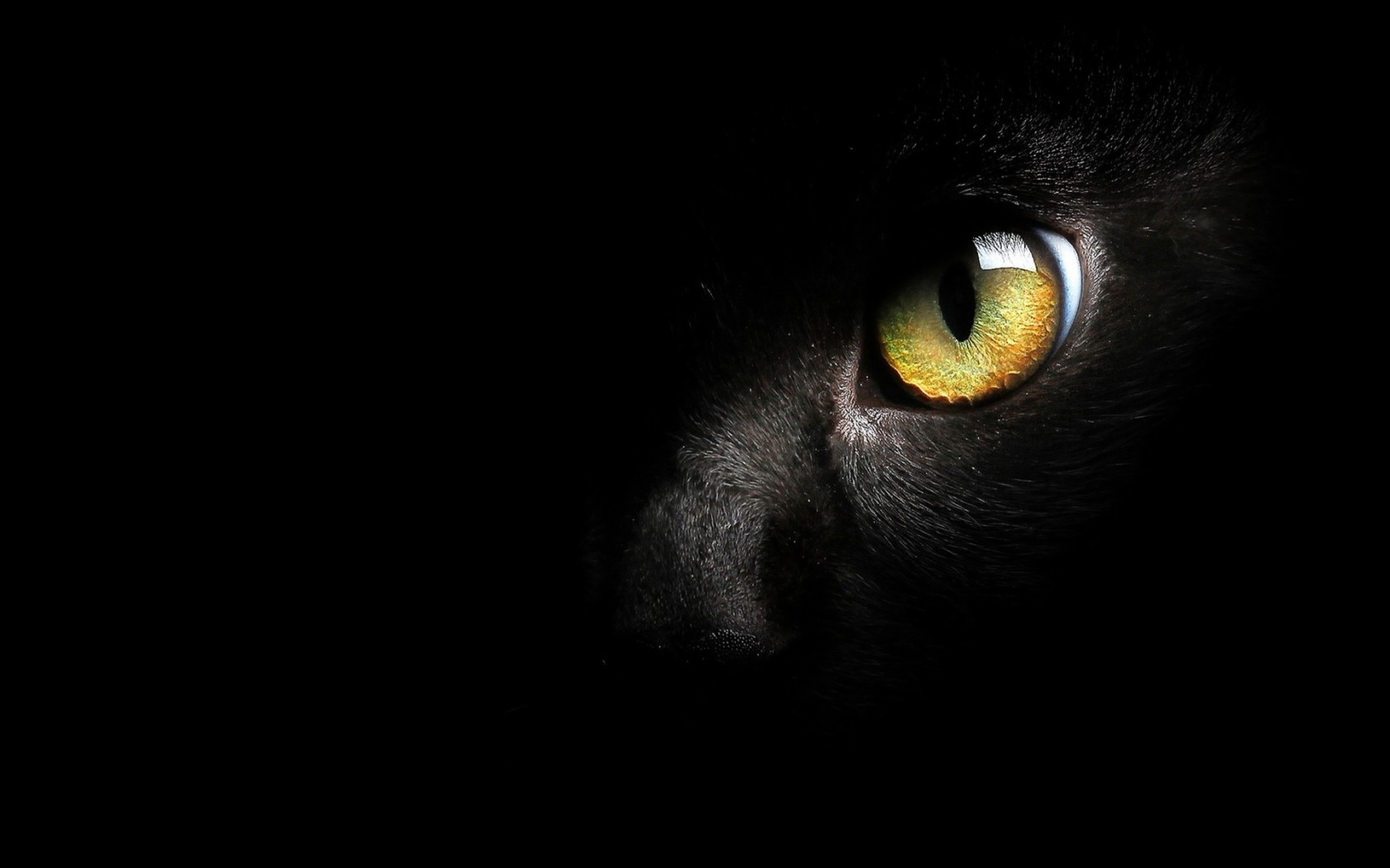 Free Download Black Cat Wallpaper High Quality Black Cat Wallpapers 1680x1050 For Your Desktop Mobile Tablet Explore 73 Black Cat Wallpapers Black Kitten Wallpaper Kitten Wallpaper For Desktop Cat