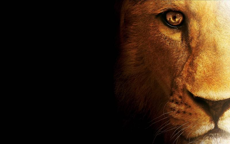 Wallpaper Graphic Lion head - My HD Wallpapers