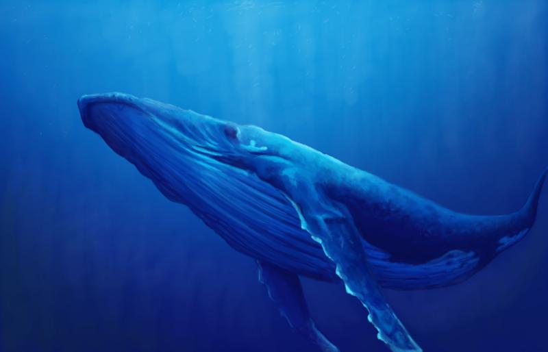 Humpback Whale Wallpaper Humpback whale by kmalmsten 800x514