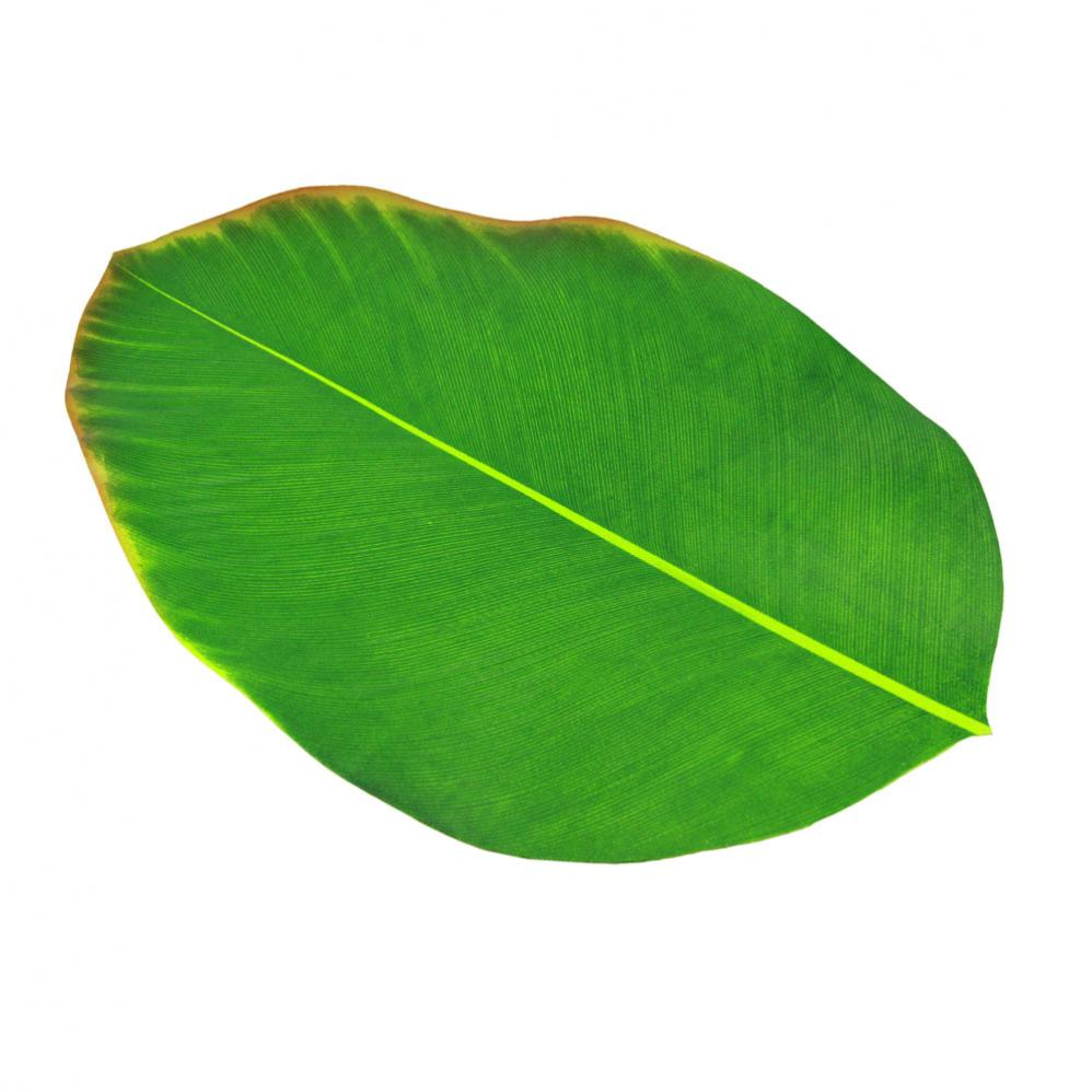 Pin Banana Leaf Hd Desktop Wallpaper High Definition Fullscreen on 998x998