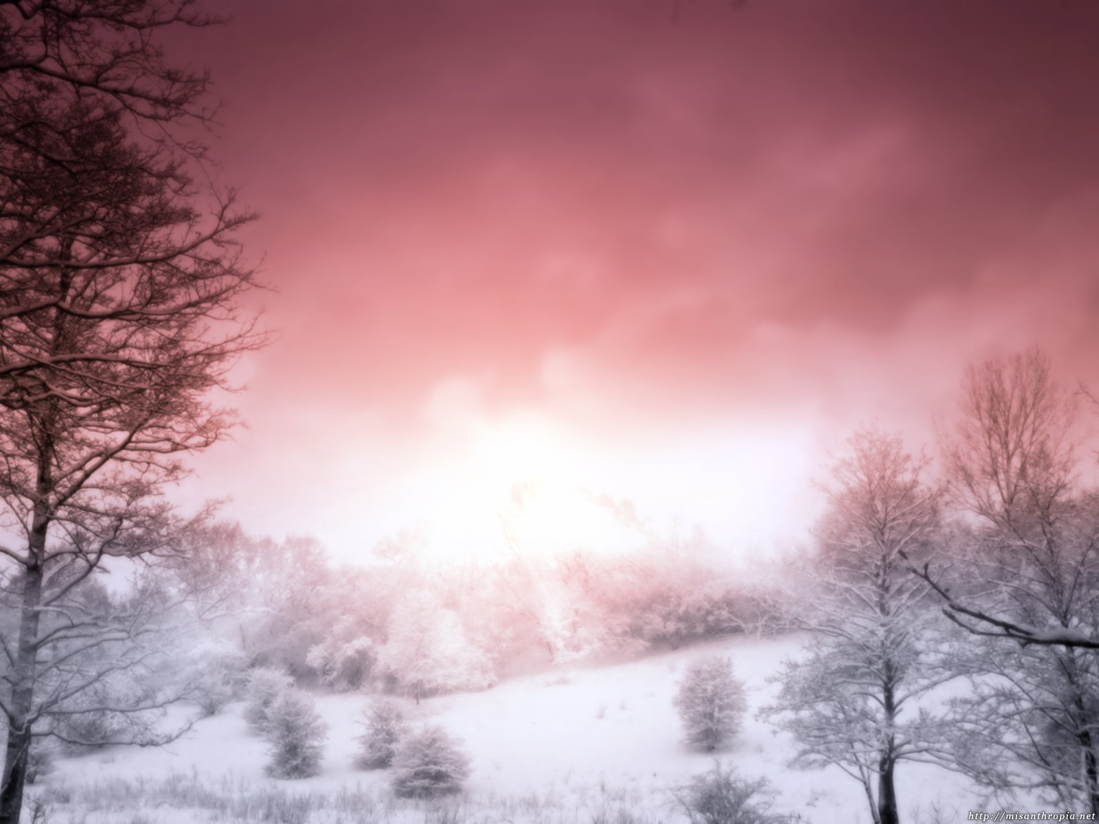 Pink Winter Wallpapers Metal Nature Heavy Metal wallpapers pictures 1600x1200
