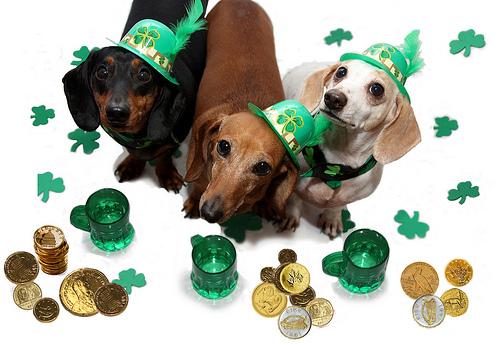 Go Back > Gallery For > Cute Animal St Patricks Day Wallpaper