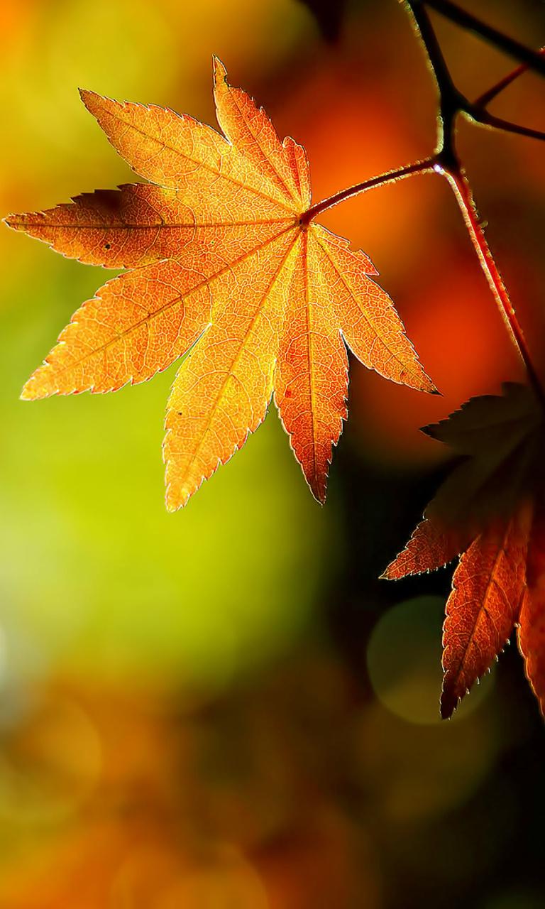 Hd wallpaper vivo - Title Hd Autumn Leaves Type Nokia Lumia 920 Wallpaper Category Nature