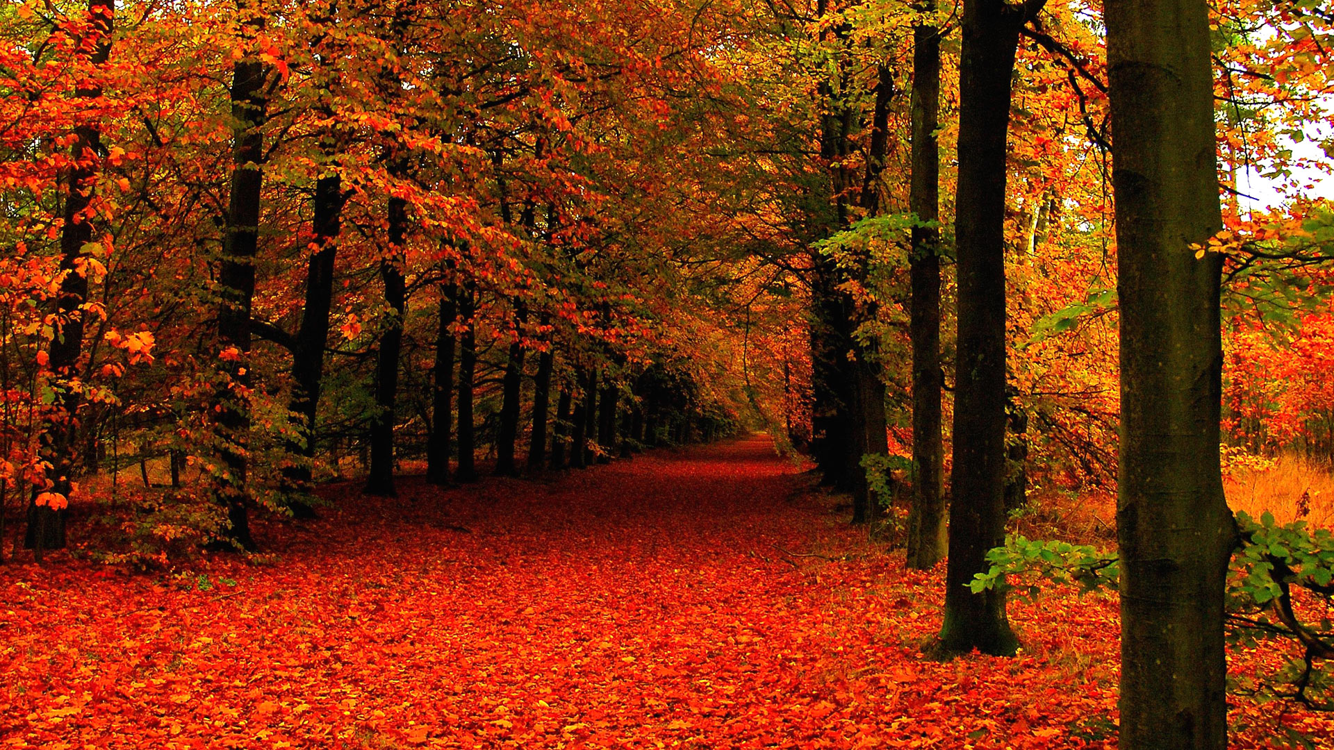 Free download Fall Leaves Background ...