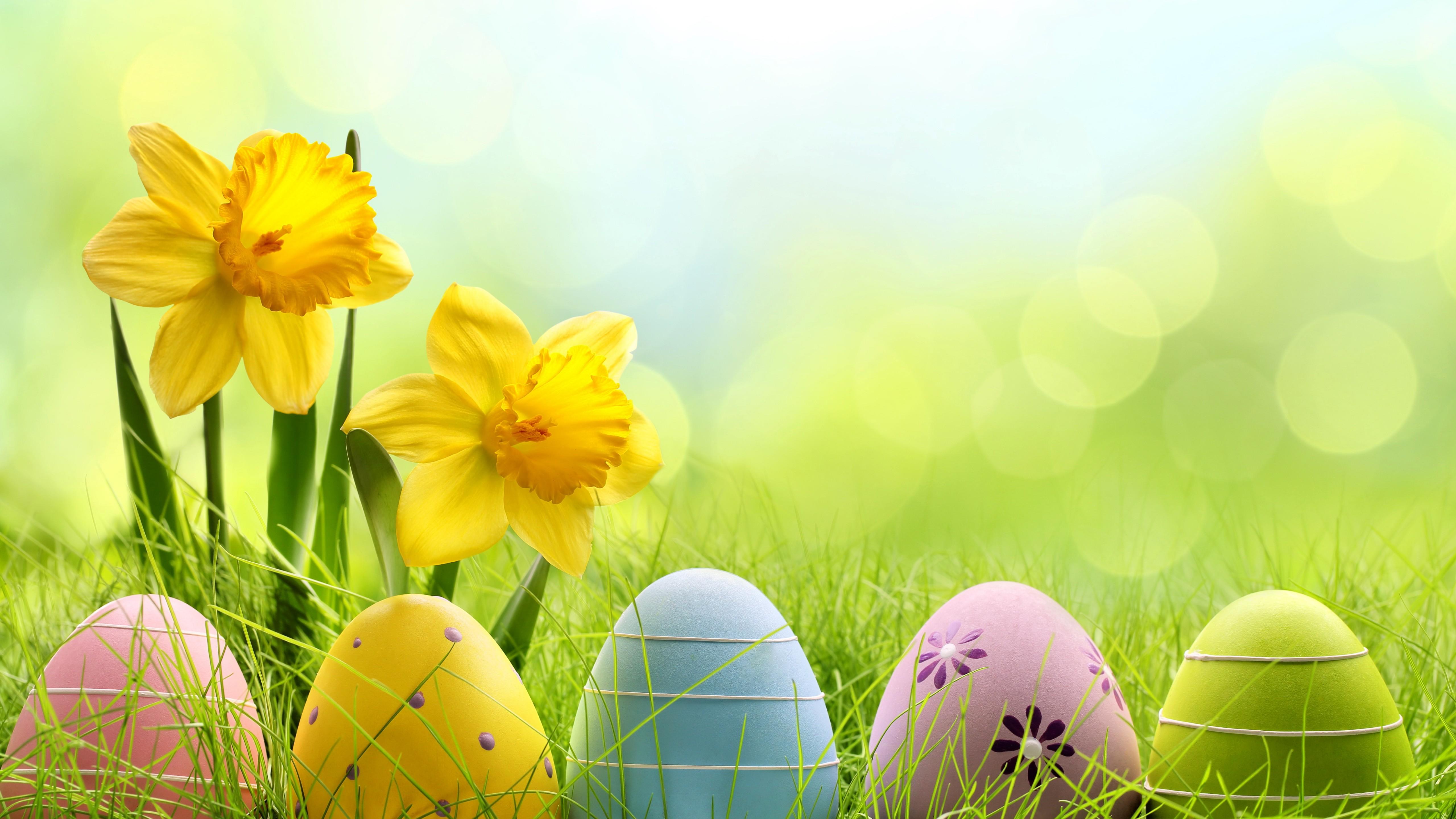 Wallpaper Easter spring flowers eggs basket Holidays 4127 5120x2880