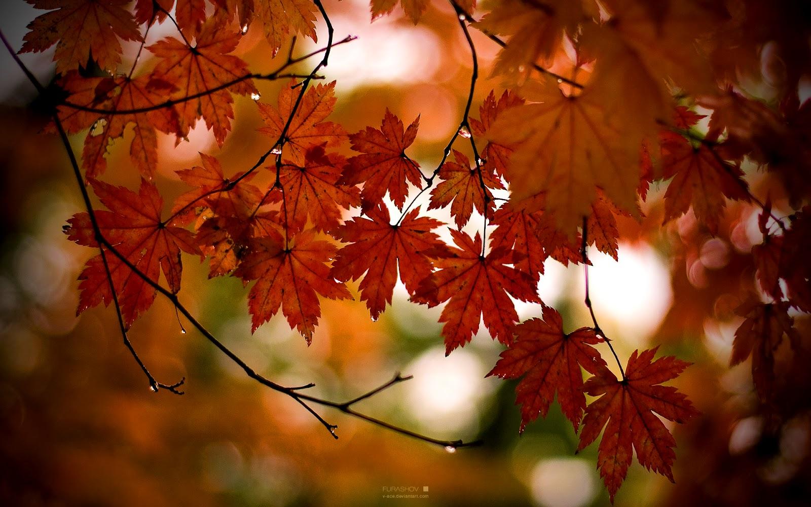 fall leaves hd wallpapers - wallpapersafari