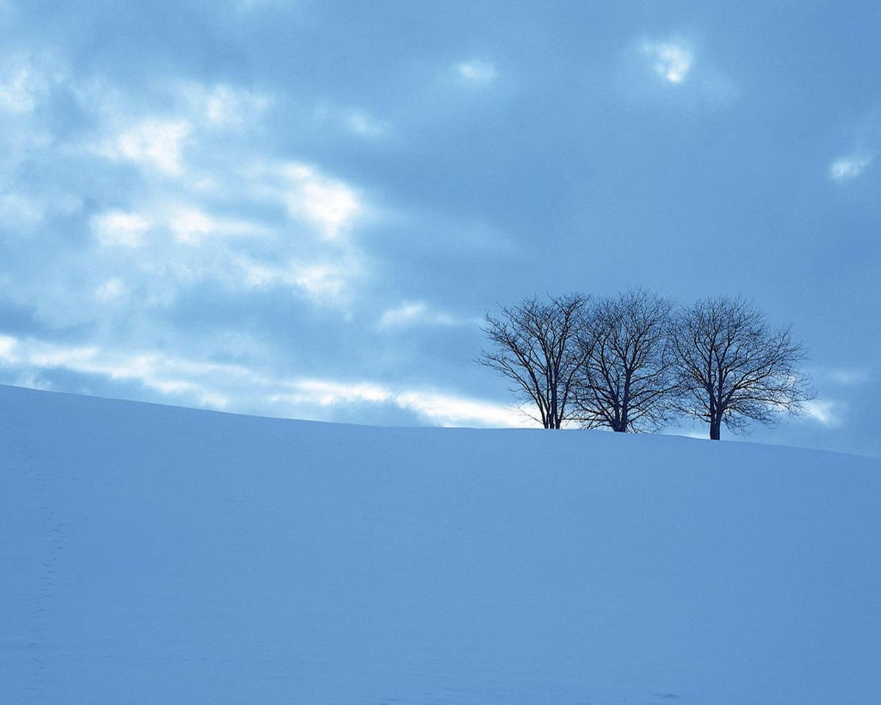 snow trees wallpaper 1280x1024