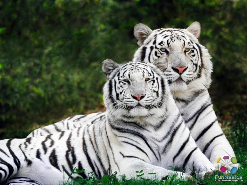 National Geographics Animal wallpapers for desktop 1024x768