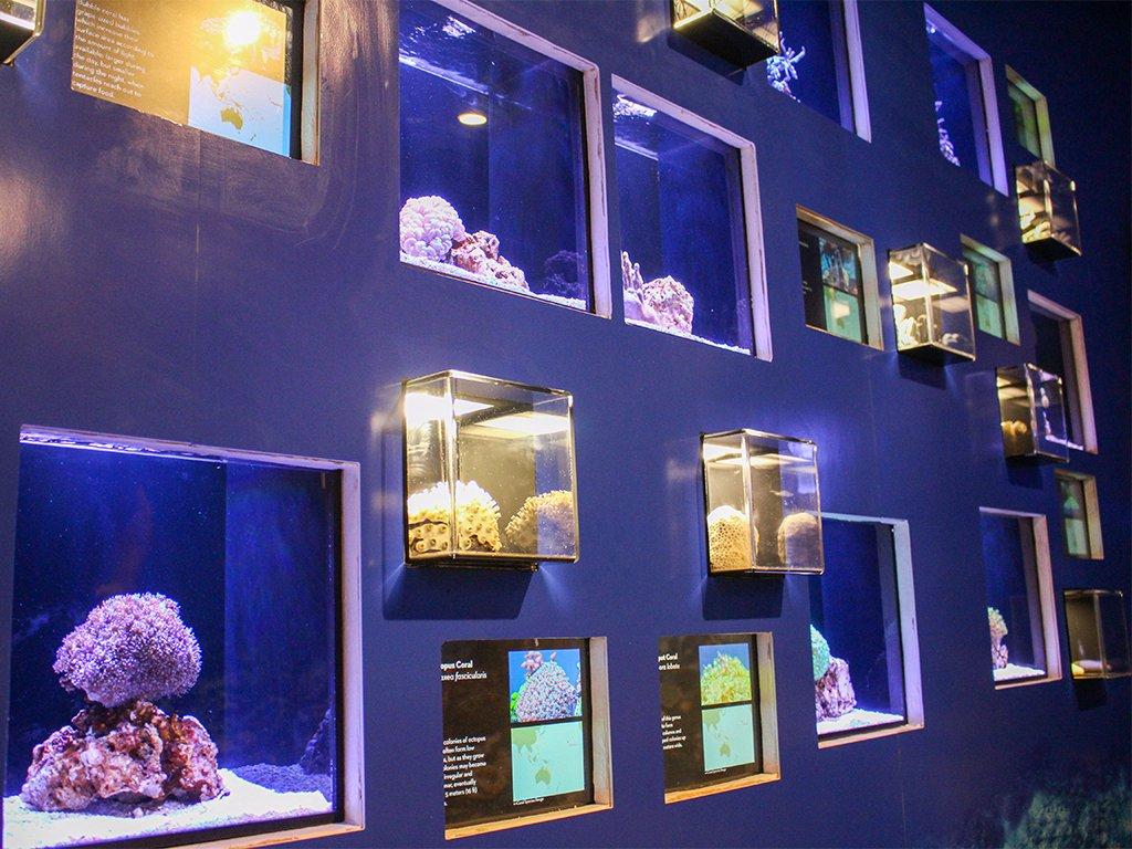 Waikk Aquarium Rolls Out New Exhibit   HONOLULU Family 1024x768