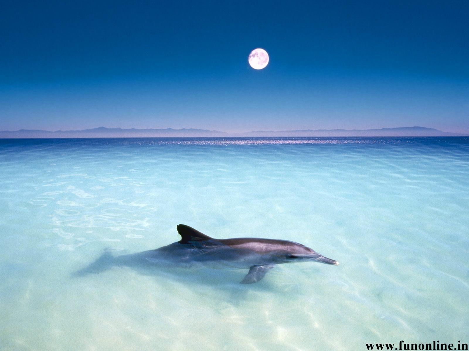 Dolphin Wallpapers Download Friendly Fish Dolphins Wallpaper 1600x1200