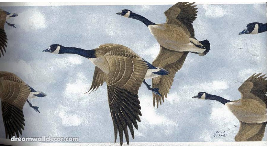 Home GLEN LOATES CANADIAN GEESE Wallpaper Border 900x500